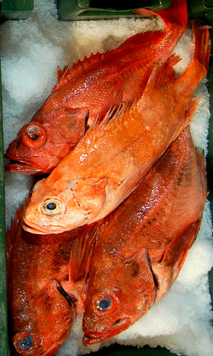 Sustainably Caught Blackgill Rockfish on ice at Monterey Fish Market Wholesale, Bay Area Fresh Seafood