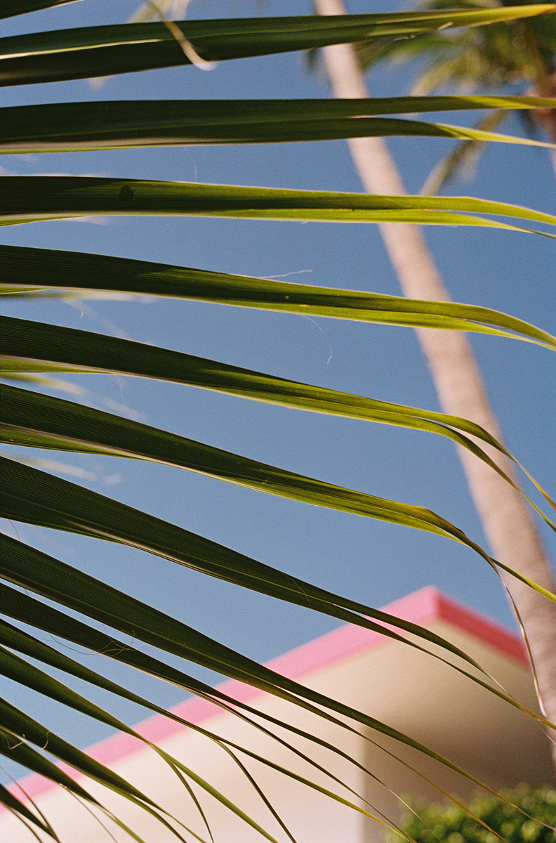 cameron_hammond_lspace_acapulco268.jpg