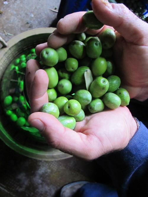 sicily_olives.jpg