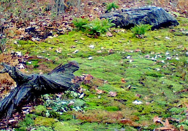 boulder log moss.jpg