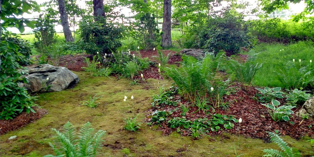 boulder moss.jpg
