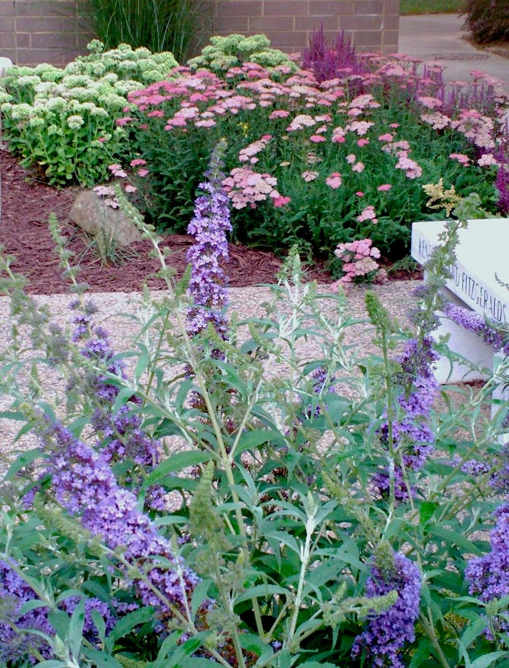 church! yarrow and butterfly bush.jpg