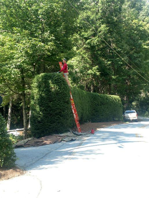 Craft hedges.jpg
