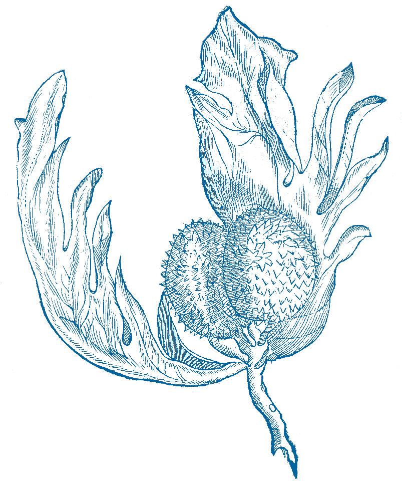 web-plant.jpg