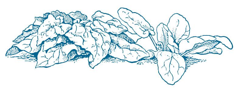 web-spinach.jpg
