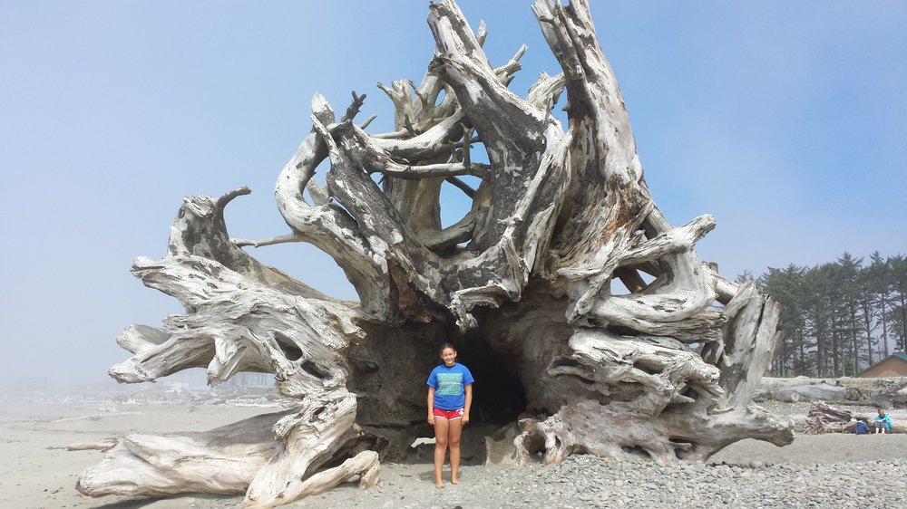 Zsofi sizing up the largest piece of driftwood I've ever seen.  The magic of La Push, July 2015.