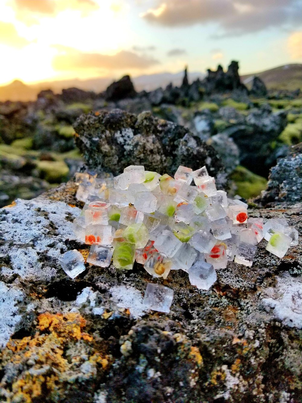Teeny tiny Ice embedded with pea and berry atop a lichen covered lava rock near Stykkishólmur, Iceland, December 2017.