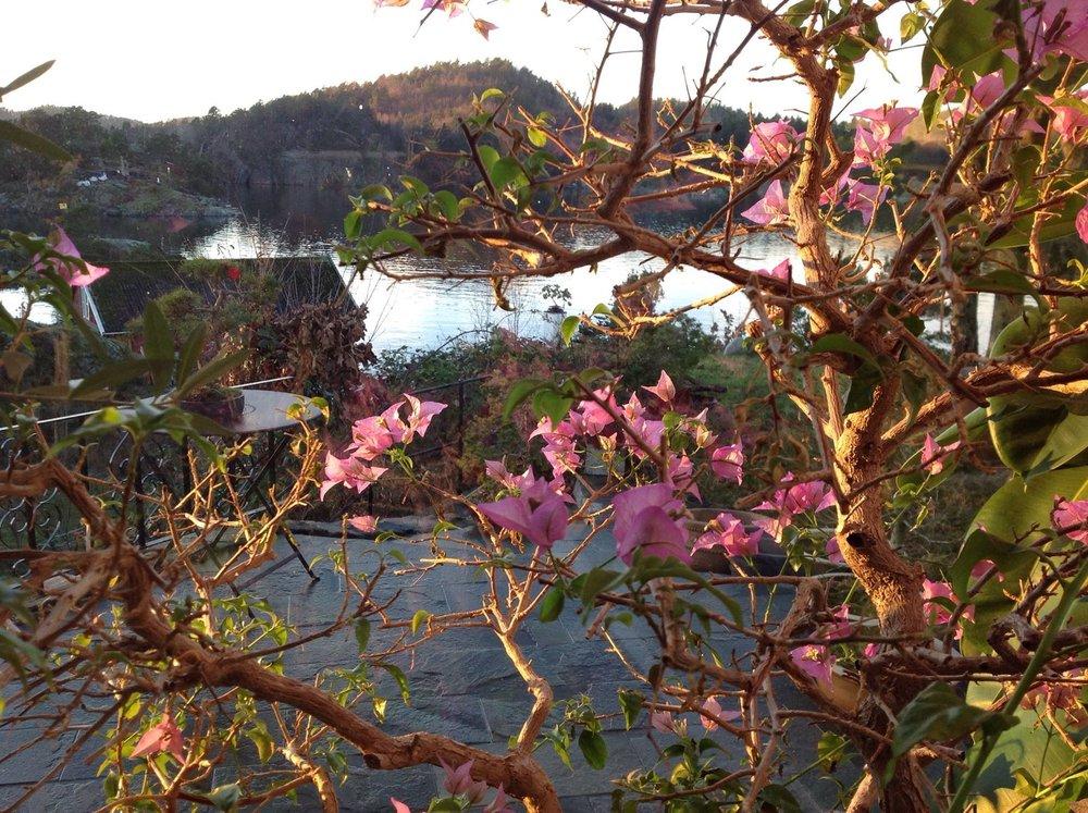 Utsikt over Snaresund • Foto: Per Arild Gjerde