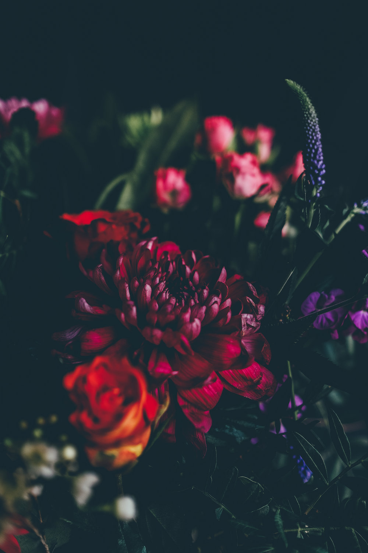 36289288-red-flower-wallpaper (1).jpg