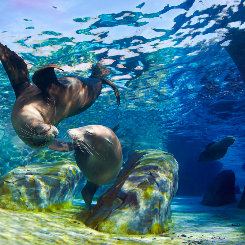swim with sea lions - Swim with sea lions and let Mother Ocean soothe your soul