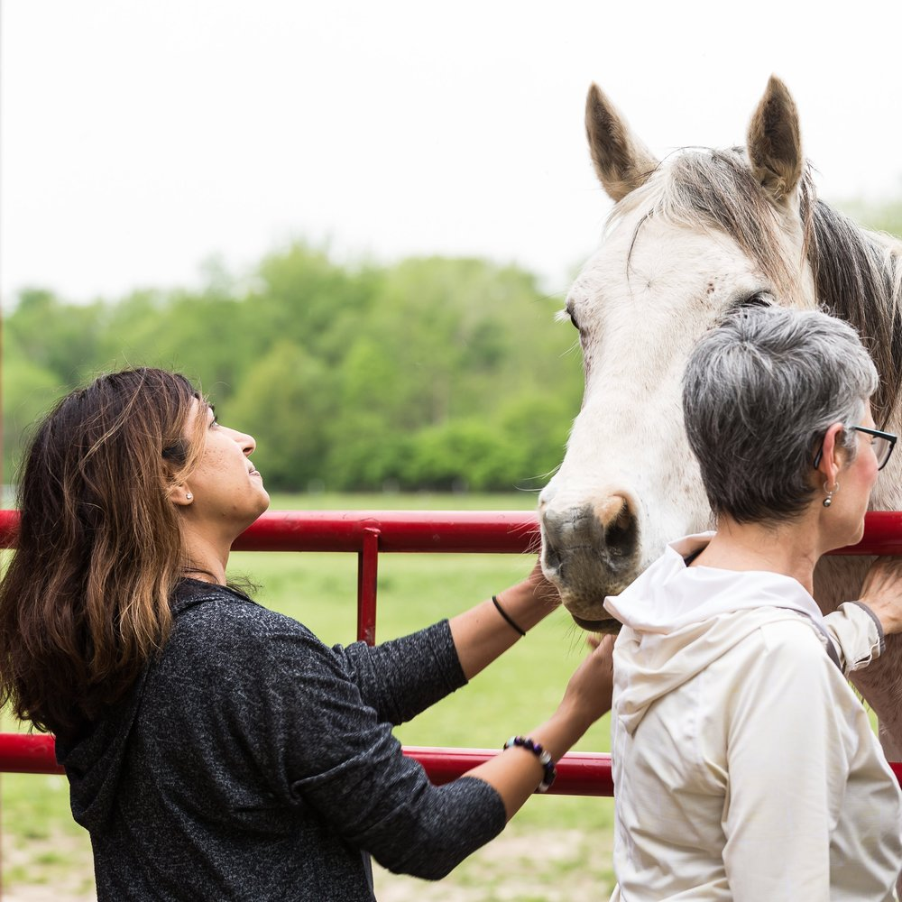 horses as a mirror - Let the spirit of Horse share how living from feminine wisdom can be powerful and healing