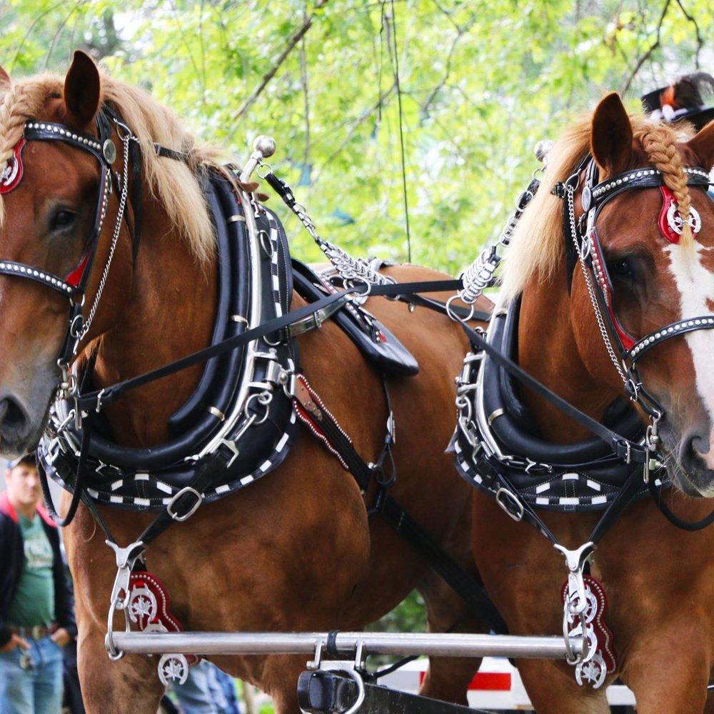 horse UCV.jpg