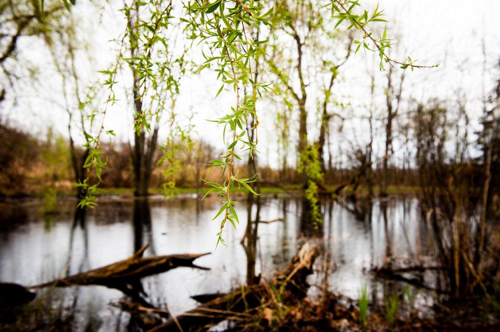 SG-Cooper's Marsh -3.jpg