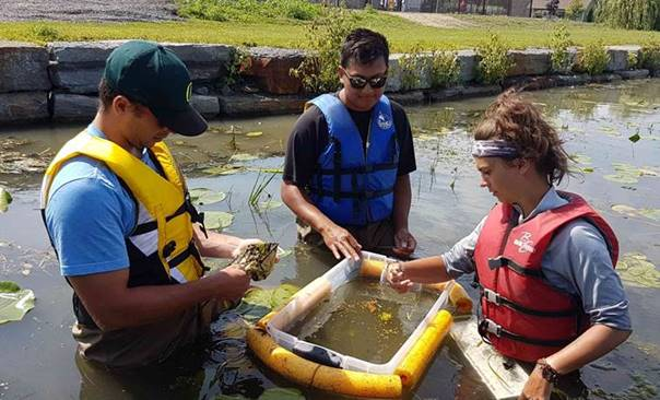 Akwesasne / River Institute Research Partnerships with FINS (Fish Identification Nearshore Survey) on St. Lawrence River   (Photo credit: River Institute)