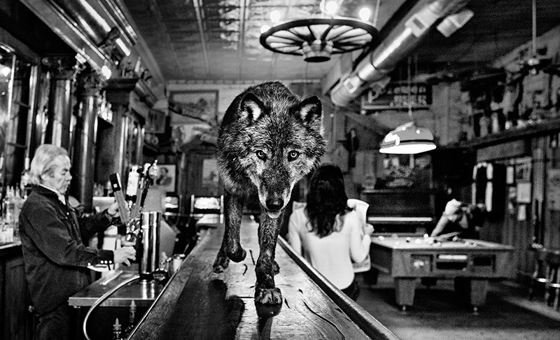 Wolf of Main Street