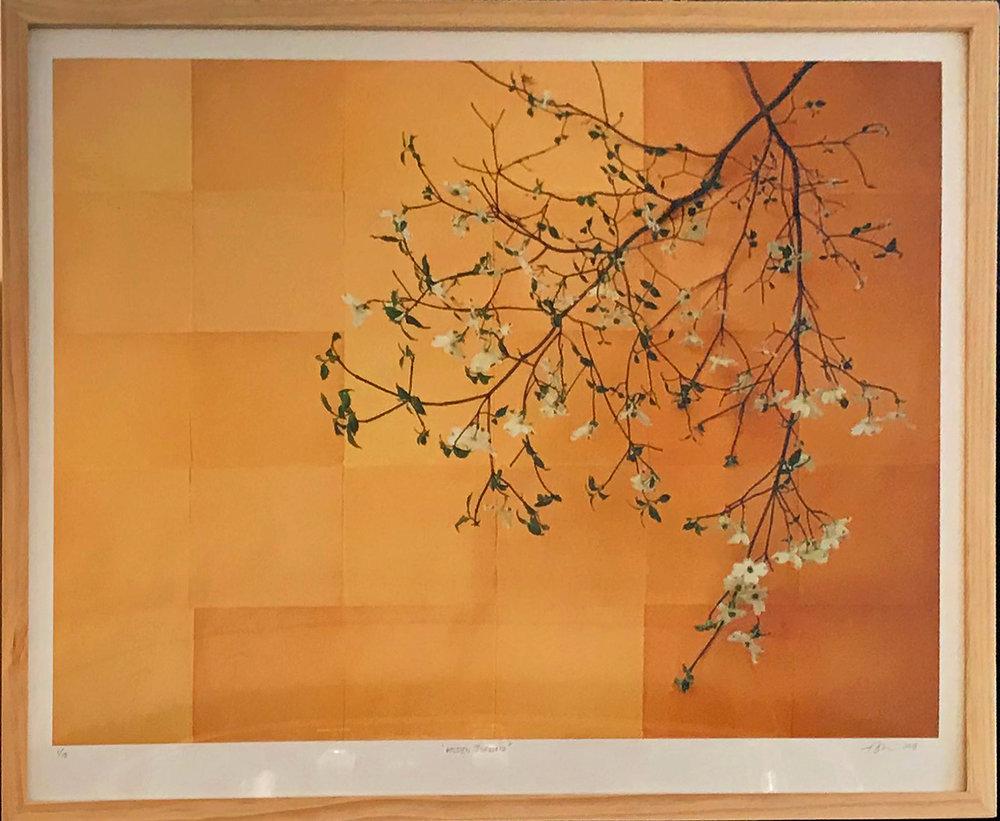 Gold Dogwood