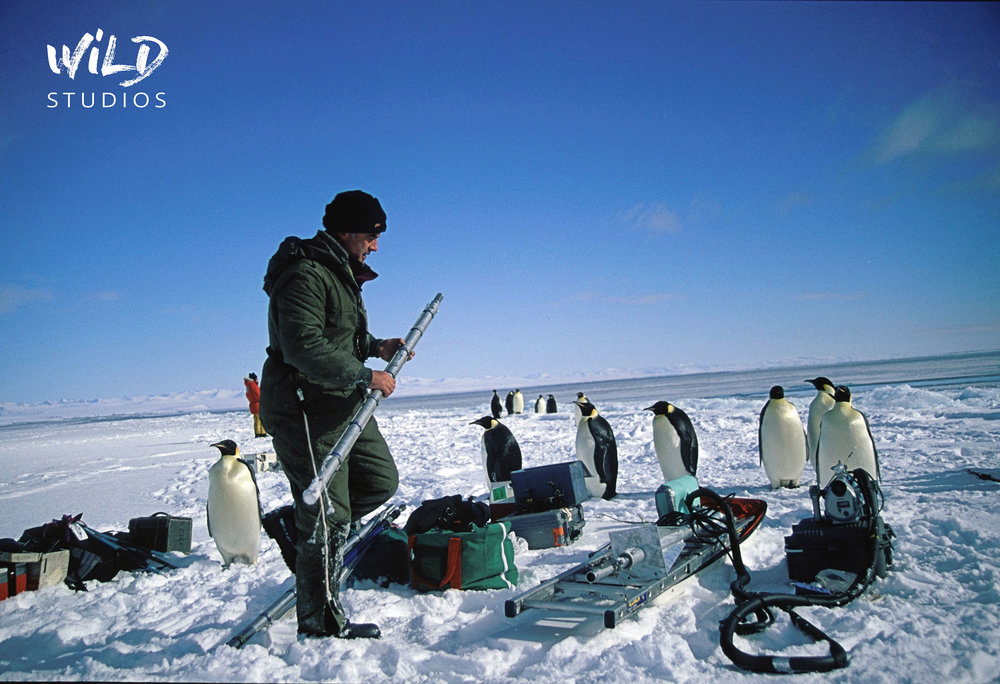 WEB_Emperor-Penguins.jpg