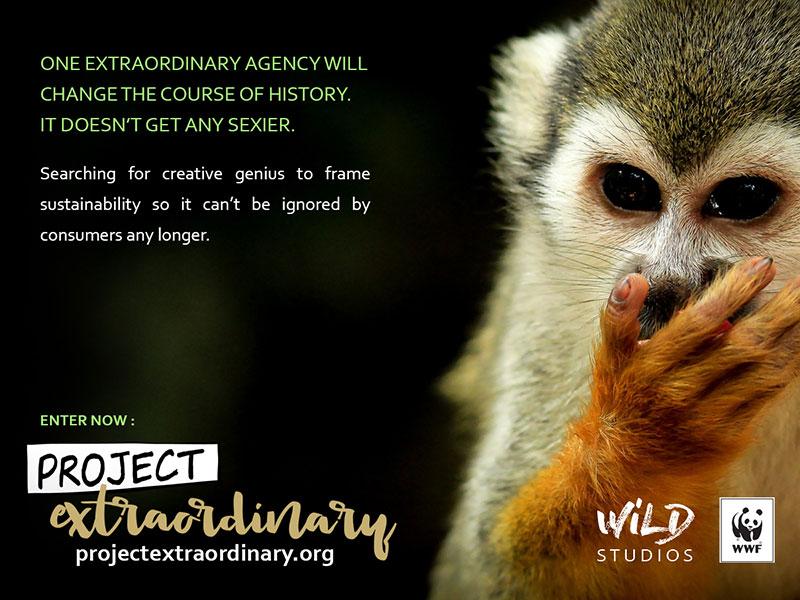 Banner-1-Monkey-close-up_WEB.jpg