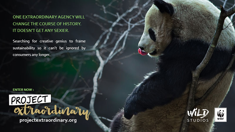 Banner-2-Panda-in-tree_WEB.jpg