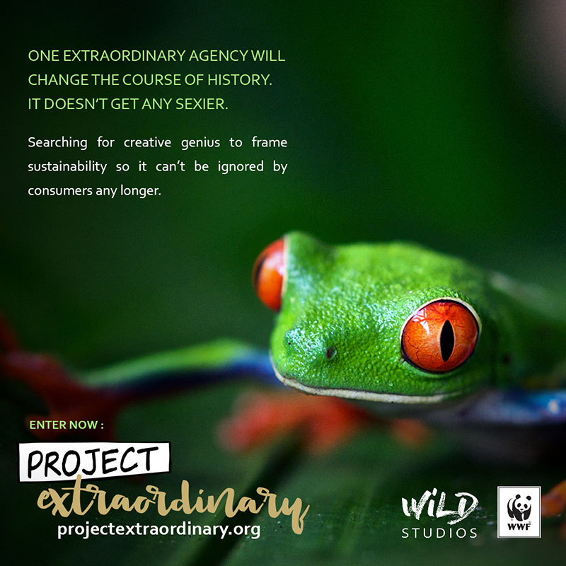 Banner-3-Tree-Frog_WEB.jpg