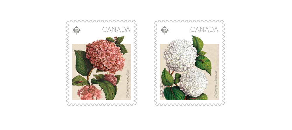 canada-post-hydrangea-stamps-sputnik-design-partners-toronto.jpg
