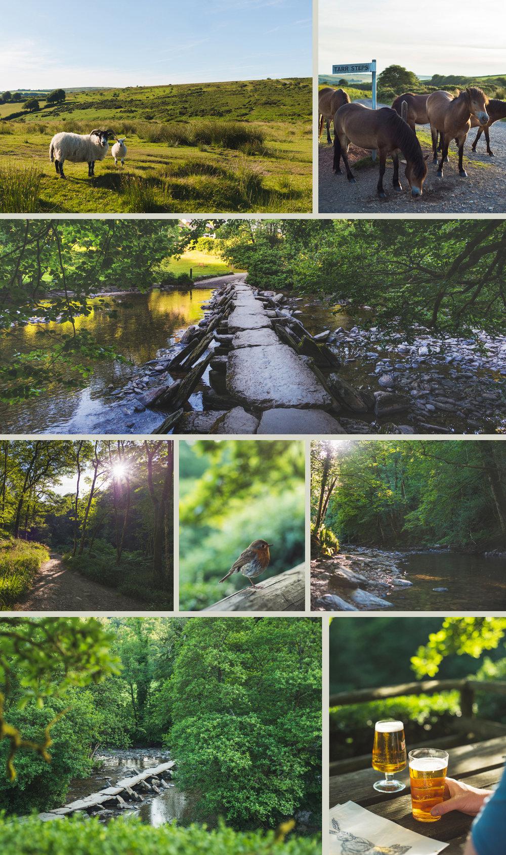 Tarr-Steps-Exmoor.jpg