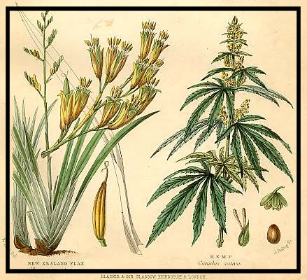 """September, 1765 - """"Began to Pull the Seed Hemp but it was not sufficiently ripe."""" - September 4""""Hempseed seems to be in good order for getting—that is of a proper ripeness—but oblige to desist to pull my fodder."""" - September 25 (source)"""