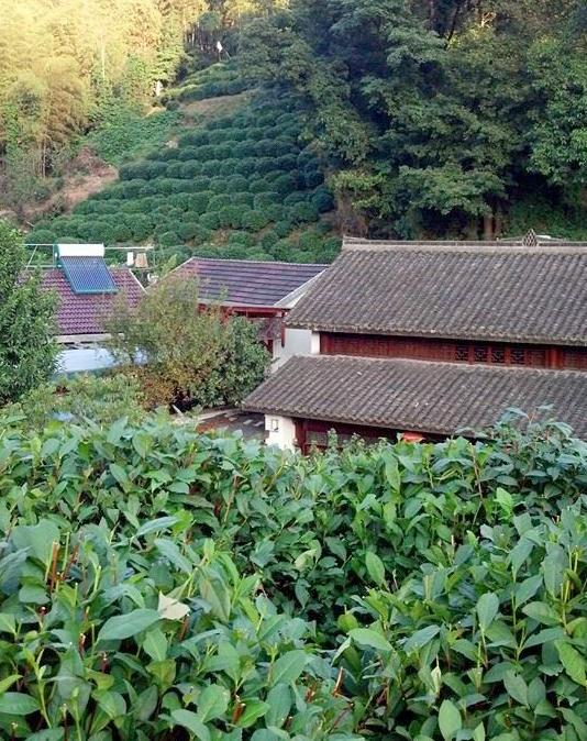 tea-plantation.jpg