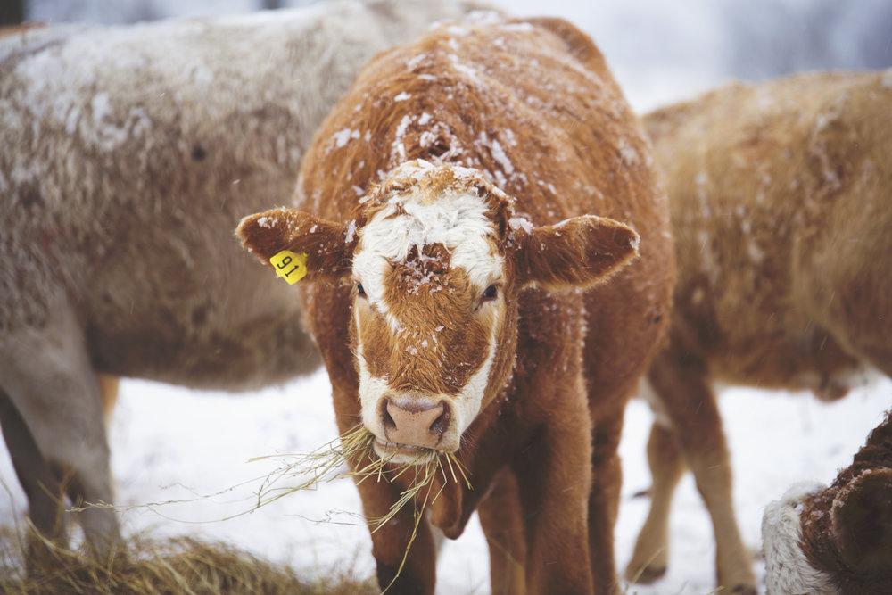 Snow_1789.jpg