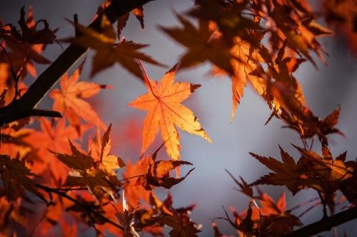 autumn-leave-ImageDragon-pixabay.jpg