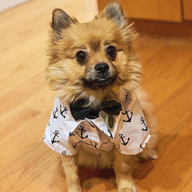 I'm Pickles the sailor man ⚓ #sailingaway #byewinter ❄️ #luckyscloset 📸: @picklesandpepperrr #handsomeguy ❤️
