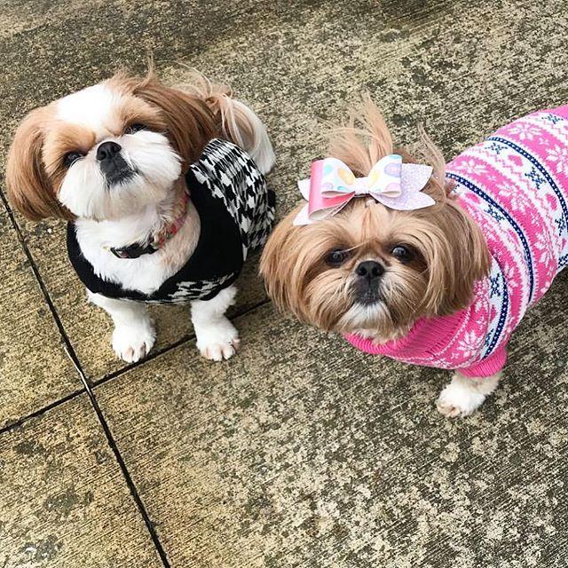 Sweater sisters 👯 #sistersquad #luckyscloset @fluffdogcrew #sweaterweather 🖤💗🖤