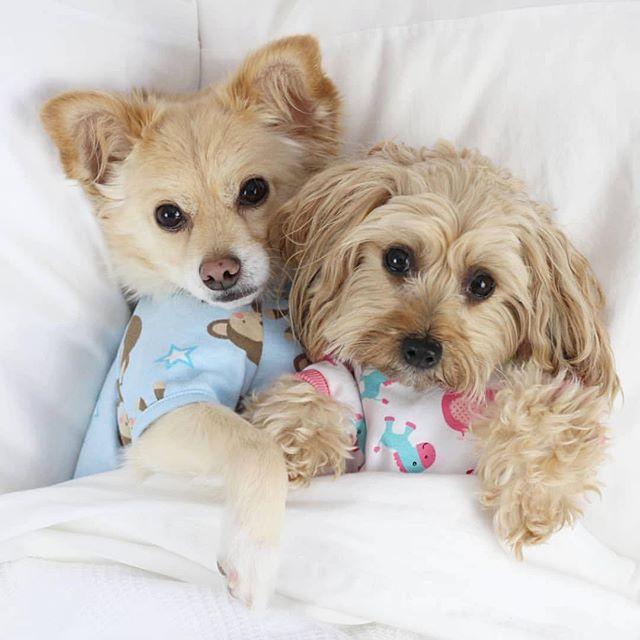 Sundays were made for cuddles 🤗 #cuddleswithbae #getyourcuddleon #luckyscloset 📸: @peakepups