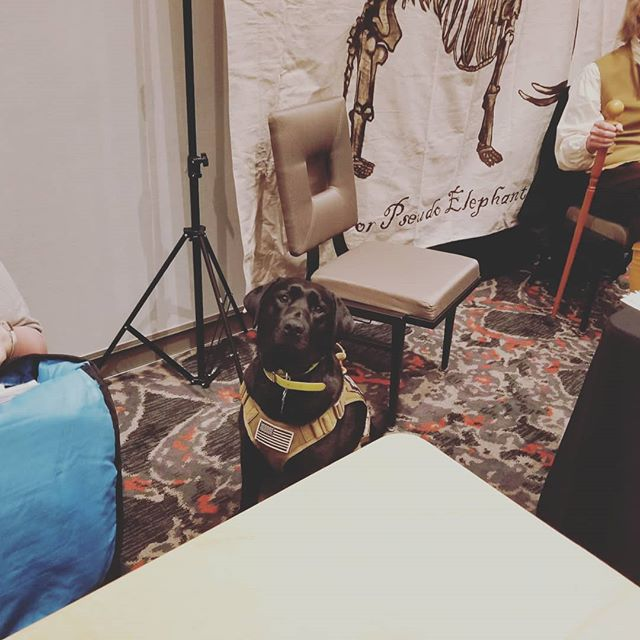 #Dogsofinstagram someone was a very good girl at the small museum conference #smallmuseumassociation