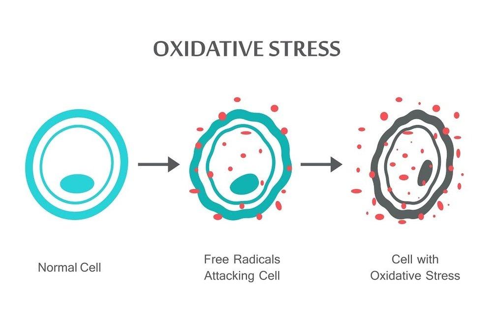 Oxidative stress Canberra Chiropractor