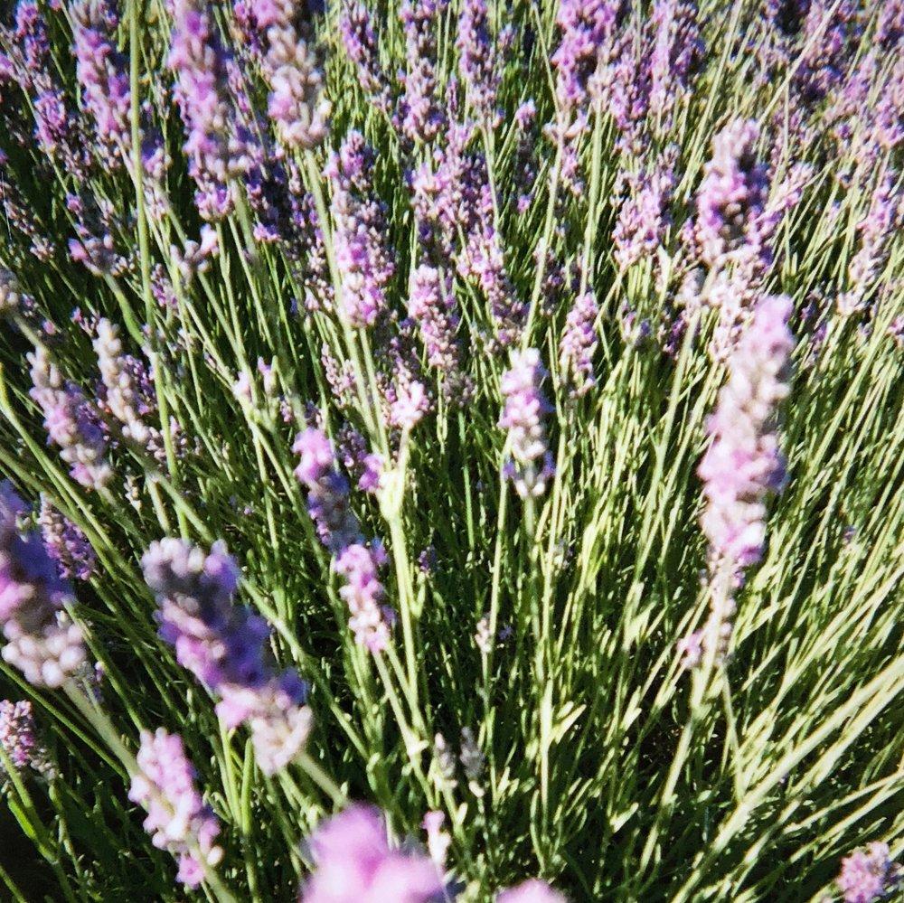 helsinki_perfume_society_lavender