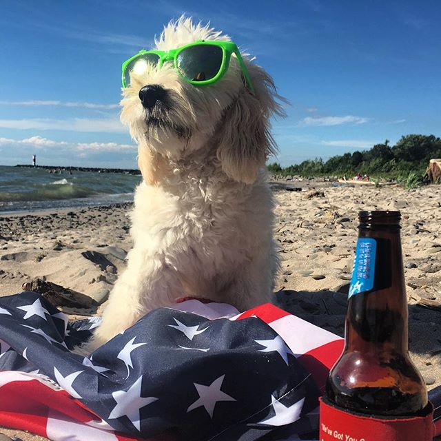 Beach dog puppy #lakeontario #selkirklight #goldendoodle