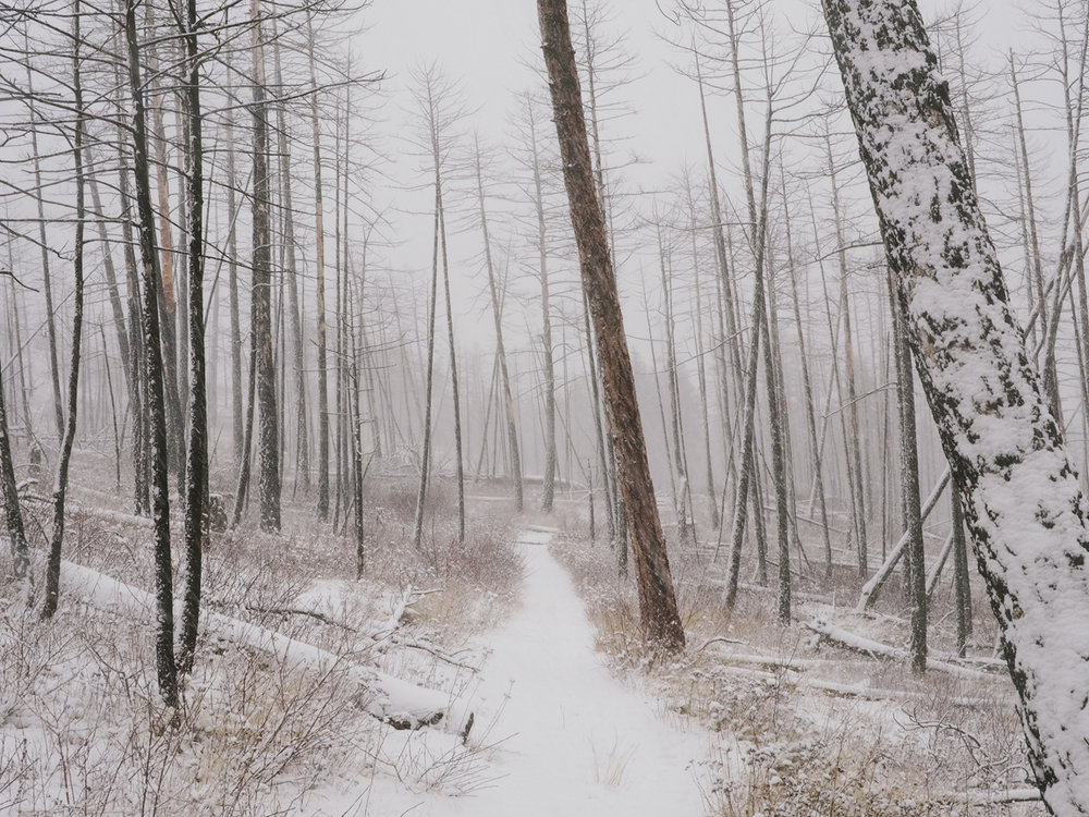 burnt_forest_sm.jpg