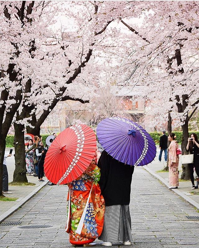 The best career advice we've ever gotten? Always be planning your next vacation. This photo of sakura season in Kyoto by @le_polyedre is providing inspiration for our next getaway! ⠀⠀⠀⠀⠀⠀⠀⠀⠀ #acornmag #japan #sakura #kyoto
