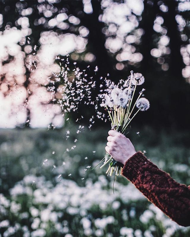 #Spring has sprung and #summer is just around the corner. The sweet peas, peonies, delphiniums and, of course, dandelions are out 🌸 @_foodstories_ captures a dreamy dandelion-fluff-filled evening.
