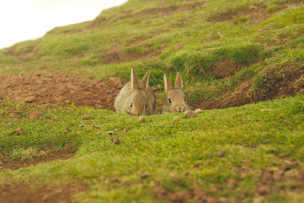 Edinburgh was also really close! I found those cute bunnies on top of the Arthur's Seat mountain in the middle of the city.