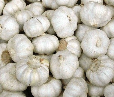 fall garlic 2.jpg