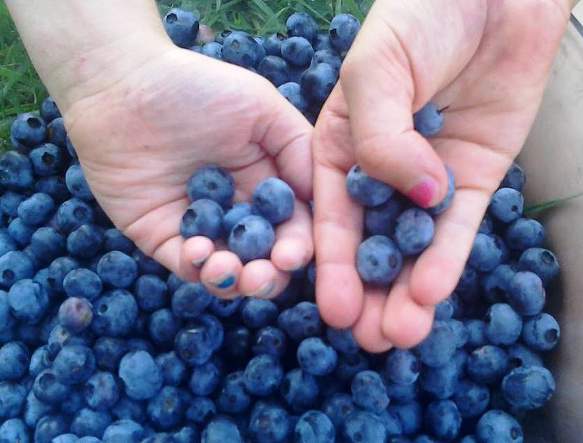 blueberries 2.jpg