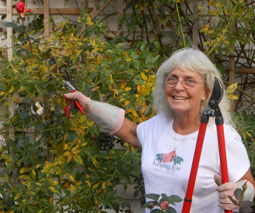 Marci does fall pruning
