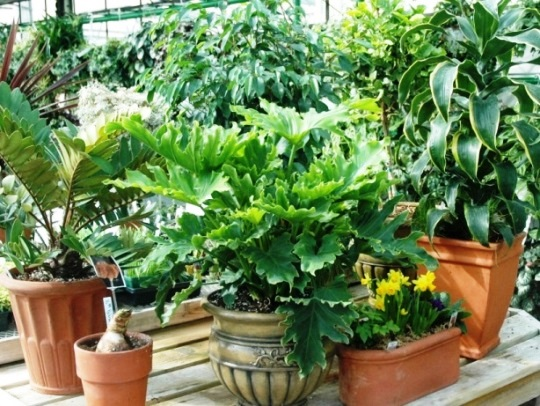 potted houseplants 1.jpg