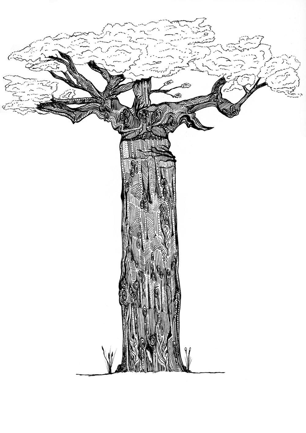 baobabneg.jpg
