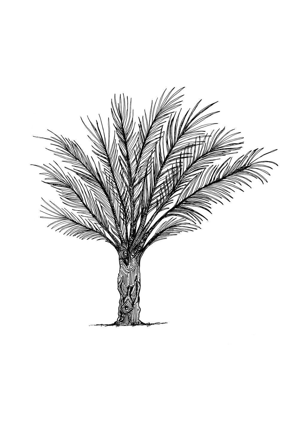 caroline nut palm.jpg