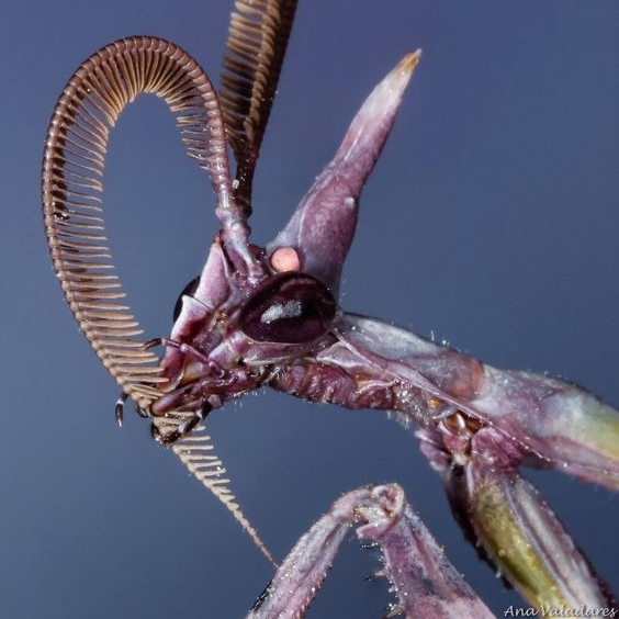 fd21cadfd0322320152ae8043a879f92--strange-animals-praying-mantis.jpg