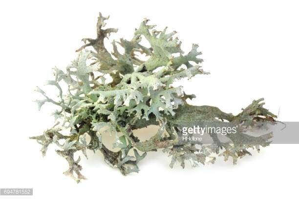 lichen.ology - focus,study, and share:: :: ::any image that says 'getty' will cost $10.that's a commercial bulk add-on service fee.commissioned work is truly priceless,but i can't pay 'priceless'.