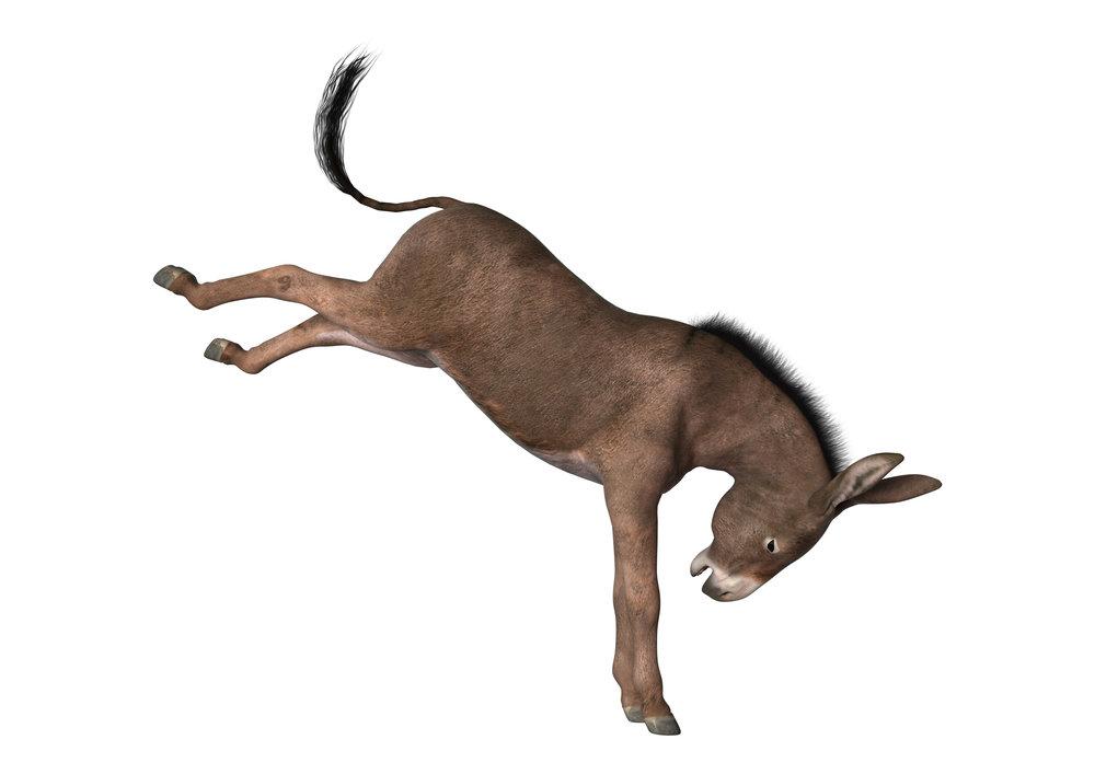 円::ジェ::N.J. ::Nancy JeanTheDancing Donkey - enje
